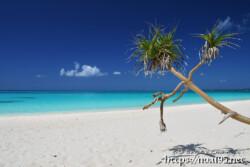 ビーチに張り出したアダンと青い海-長間浜-
