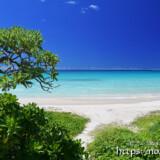 ビーチへ続く小道-渡口の浜-