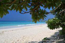 モンパの木陰-渡口の浜-