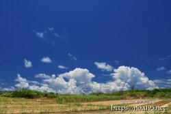 さとうきび畑の先の入道雲