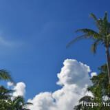 椰子の木と入道雲
