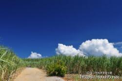 さとうきび畑の道と入道雲