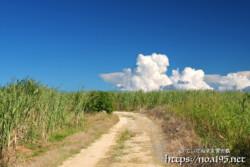 サトウキビ畑の入道雲